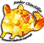logo amber chinchillas