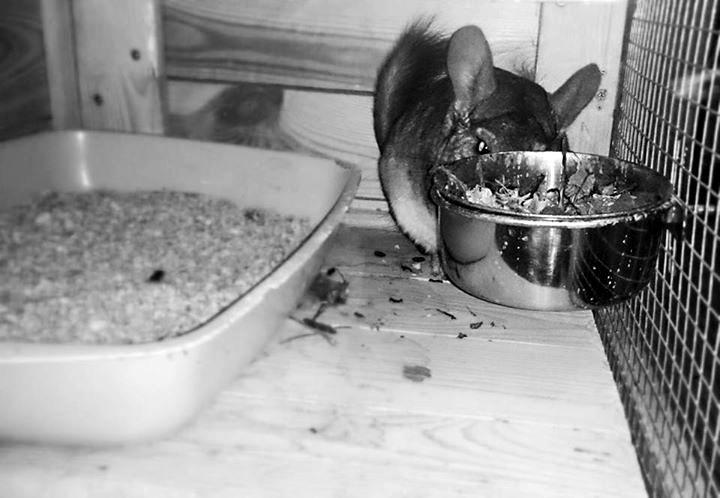 umieszczenie miski