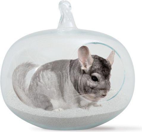 zolux szklana kąpielówka dla szynszyli