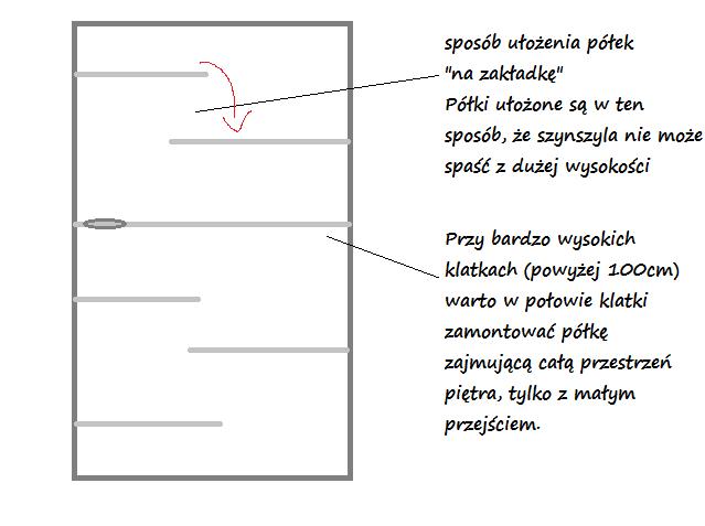 schemat rozmieszczenia półek w klatce dla szynszyl